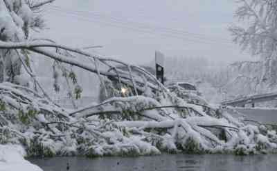 Intensive Schneefälle Ende April sorgen für starken Schneebruch: ungewöhnlicher Wintereinbruch mit Folgen