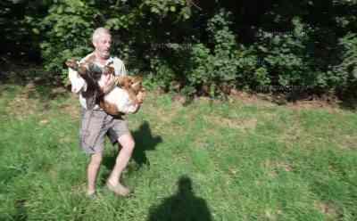 Wenige Tage altes Kalb von Autobahn A95 gerettet – Verkehrspolizei Weilheim schützt Kalb: Durch den Wildschutzzaun geschlüpft – Landwirt kommt mit Anhänger und holt das Kälbchen ab