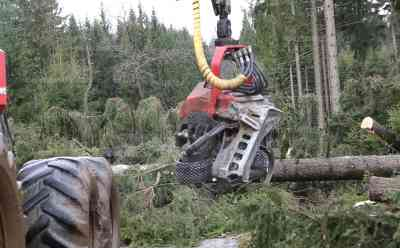 Nettodach droht wegzufliegen, schwere Forsttechnik gegen den Sturm, Harvester im Einsatz: Feuerwehr hätte bis Montag gebraucht, verherrende Waldschäden