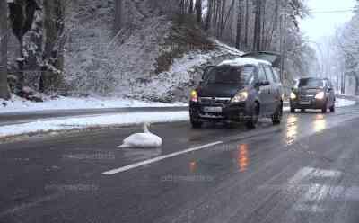 Schwan und LKW legten Staatsstraße 2370 lahm: Schneeglätte sorgt für LKW Unfall, Schwan macht es sich auf der Staatsstraße gemütlich